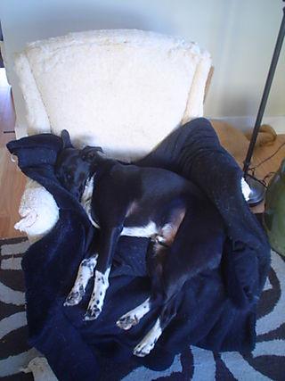 Reupholstering professional